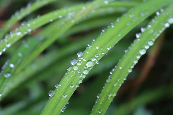 Tut dem Rasen im Sommer besonders gut: Beregnung der Pflanzen nach Bedarf