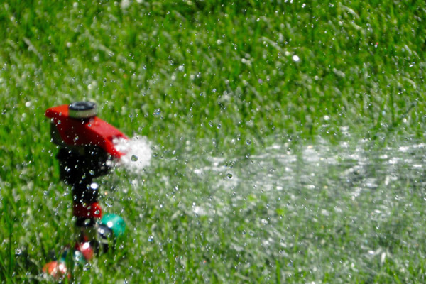 Wenn der Rasen im Sommer grün bleiben soll: Am besten mit automatischer Bewässerung