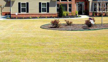 Ist vertrockneter Rasen nach Dürre noch zu retten?