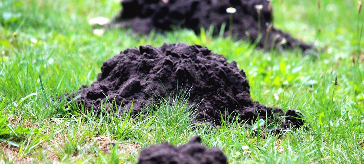 Schutz gegen den Maulwurf - Maulwurfnetze verhindern neue Hügel