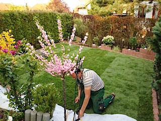 Rollrasen und Gartengestaltung auch in Thüringen