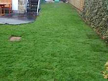 Saftiger grüner Rasen verlegt von Rollrasen Schirmer in Erfurt, Jena und Apolda