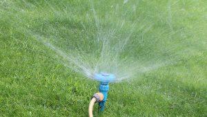 Nach der Nachsaat im Frühjahr den Rasen reichlich und regelmäßig bewässern