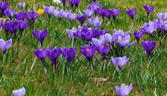 Rasen im Frühjahr richtig pflegen