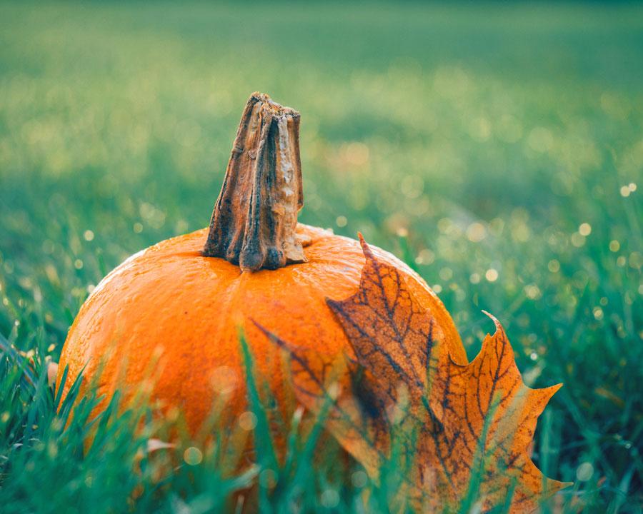 Rasen im Herbst - Pflege und Düngung machen ihn winterfest