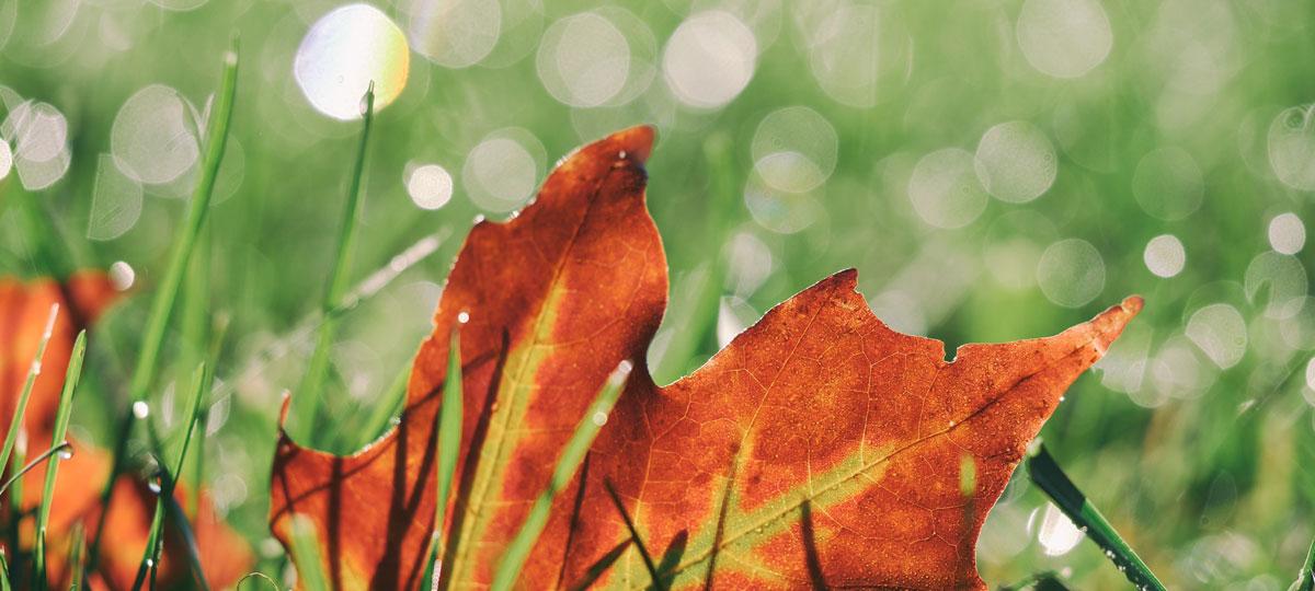 Rasenpflege im Herbst - so bereiten Sie den Rasen auf den Winter vor